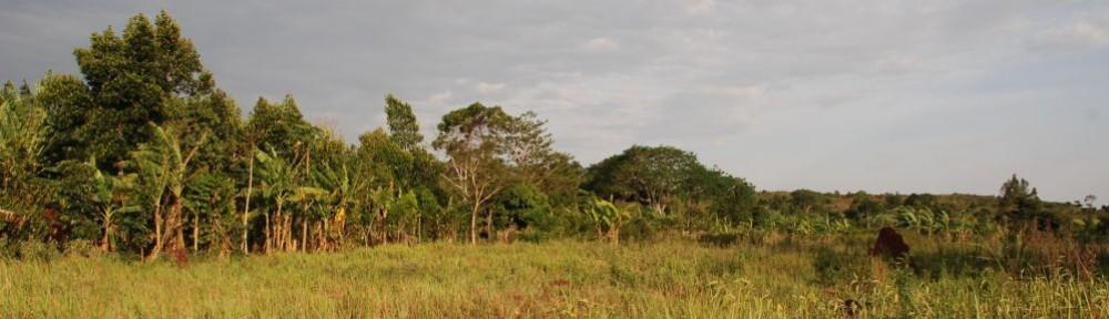 AFRIKAHILFE   UGANDA   E.V.